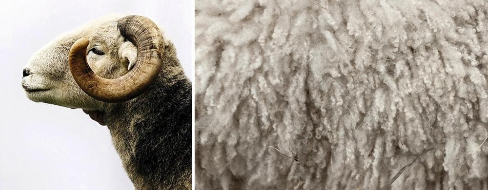 wool-2