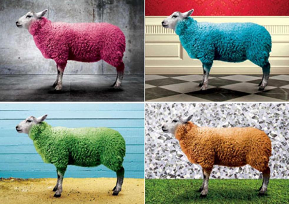 wool-image