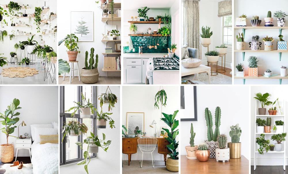 houseplants interiors inspiration