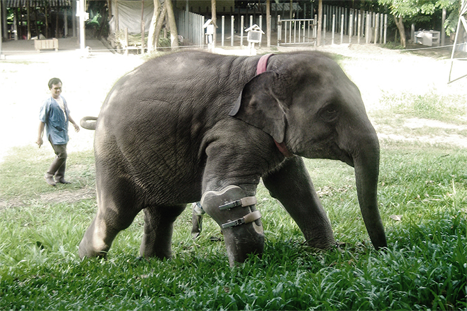 Elephant Parade Mosha